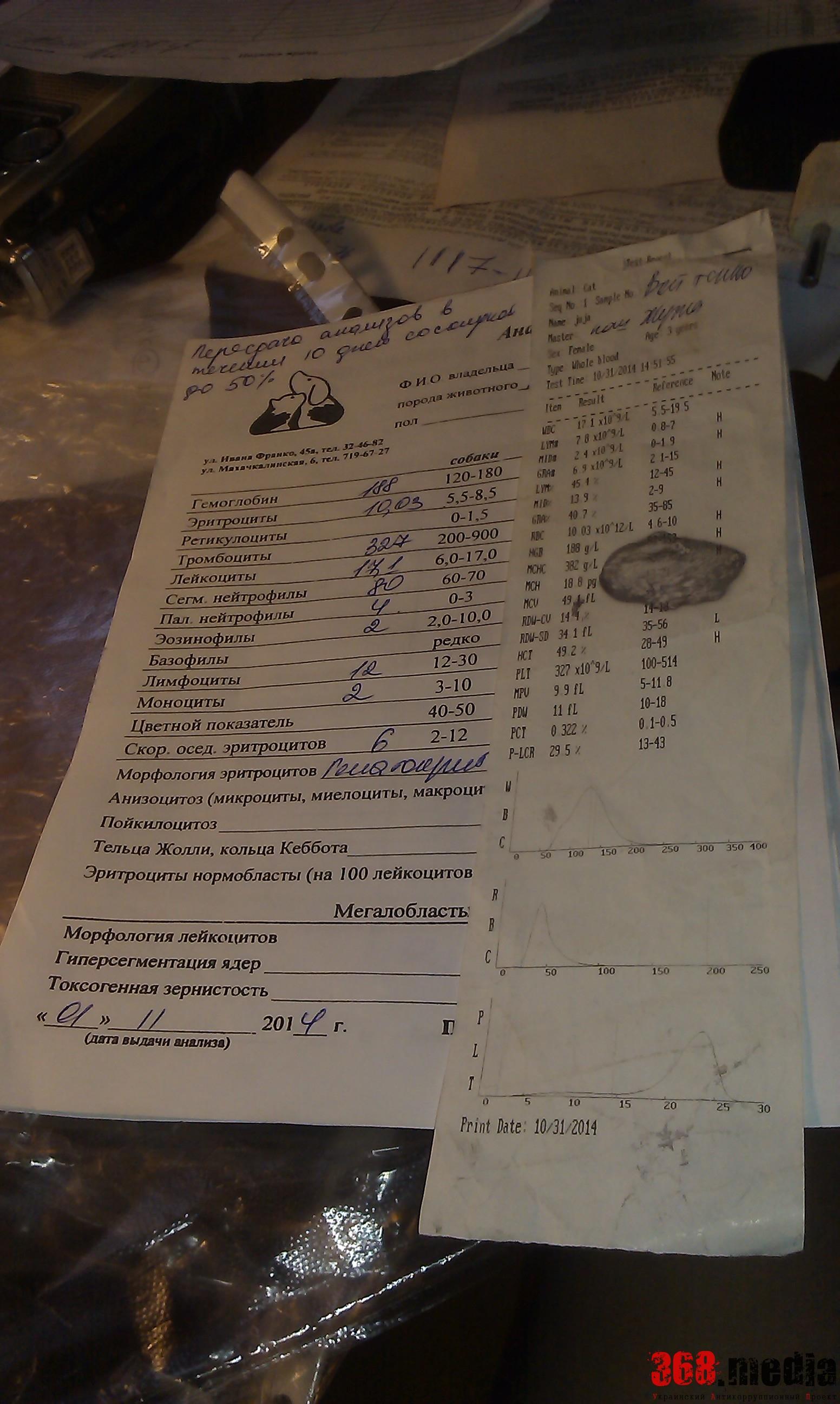 Анализы. Фото: Алена Войтенко