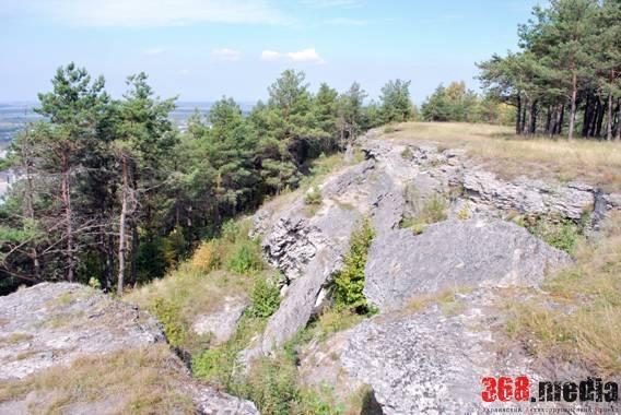 В Солотвино аферистка украла участок леса