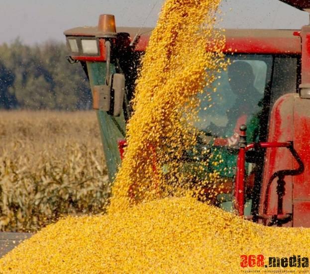 Луцкие чиновники, укравшие зерна на 90 миллионов гривен, отделались небольшим наказанием