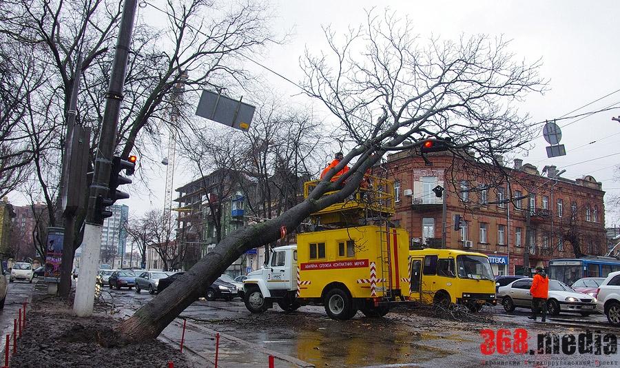 Одесская мэрия продолжает игнорировать проблему аварийных деревьев (фото)