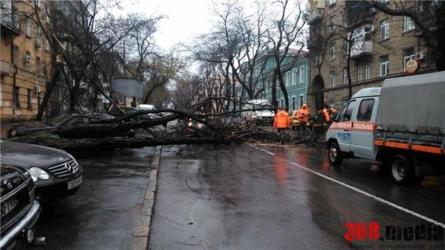 Упавшее дерево на Торговой. Фото: vk.com