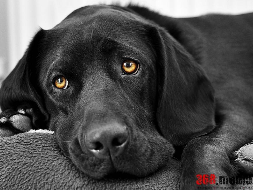 Николаевский авиаремонтный завод потратил полмиллиона гривен на вожатых собак без животных