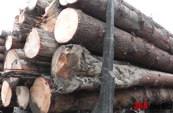 В Черновицкой области лес из заповедника незаконно продавали за границу