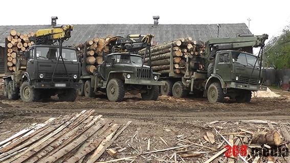 Замглавы Волынского лесхоза подозревается в незаконной вырубке леса на более 17 млн гривен