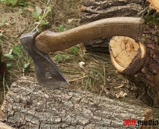 Сотрудники харьковского лесхоза «потеряли» леса на 17 млн гривен