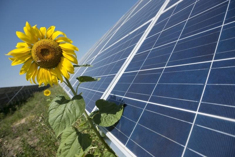 Инвесторы в альтернативную энергетику хотят подать в суд на ГП «Гарантированный покупатель»