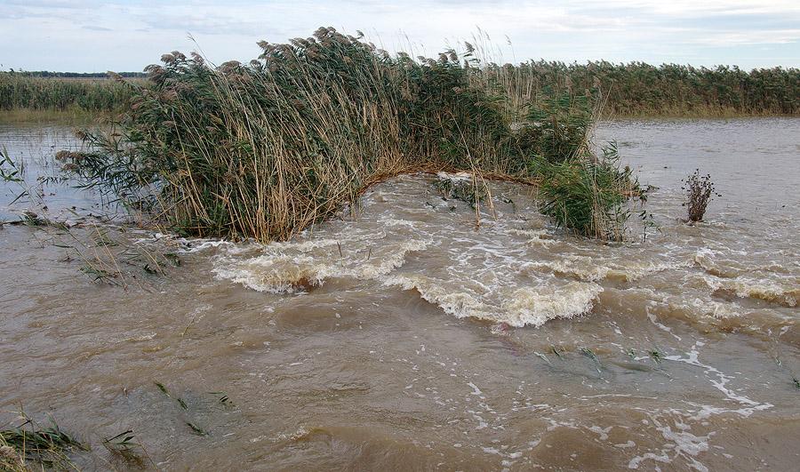 Скандальная измаильская компания выиграла 9,5 миллионов гривен на расчистку реки