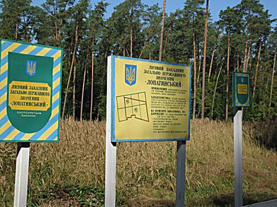 Львовский лесник помог уничтожить почти семь тысяч столетних сосен