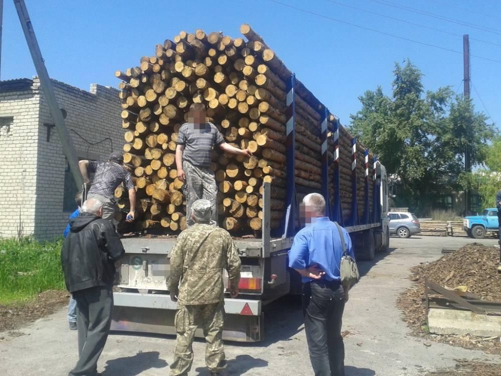 Директор лесничества в Кировоградской области занижал цены при продаже древесины