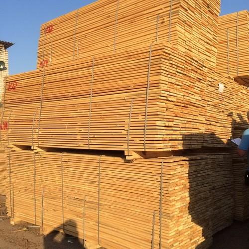 В Житомирской области вручили подозрение участникам группы в незаконной вырубке леса