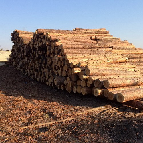 Халатность трех лесников Красноградского лесхоза привела к потере более 5 млн гривен
