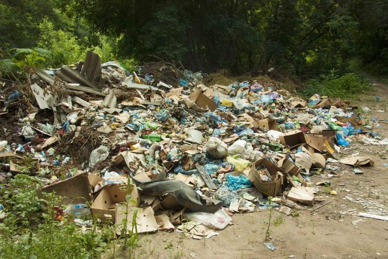 ВКаменском увеличились штрафы зазагрязнение лесов