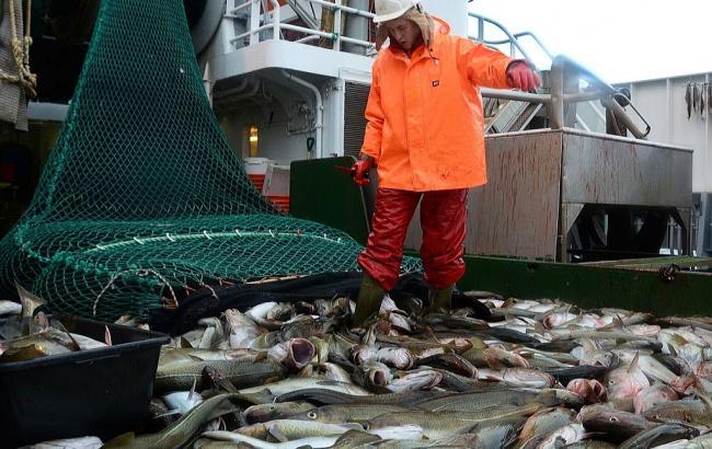 Украинская рыба «уплывает» от отечественного потребителя