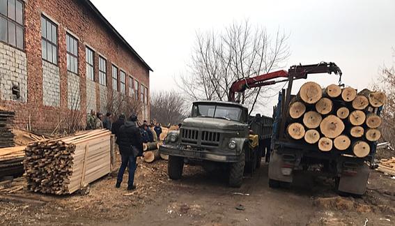 Директор одесского лесхоза незаконно рубил деревья для пилорам