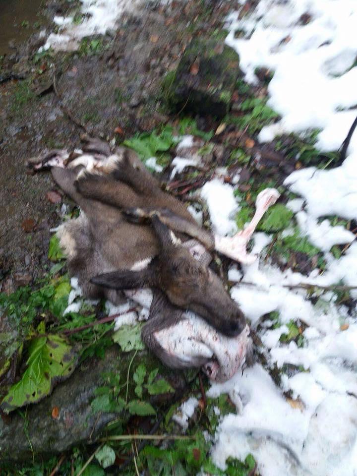 Охрана Карпатского биосферного заповедника покрывала убийство животных