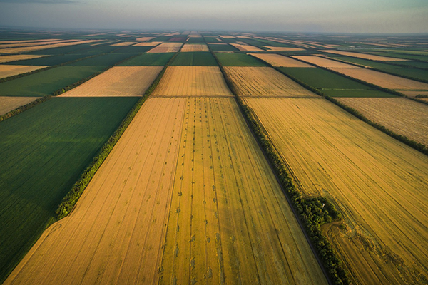 В Киевской области фермер захватил 35 гектаров земли