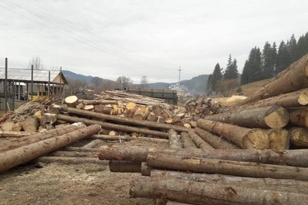 Чиновники наворовали в Карпатском регионе леса на два миллиона гривен