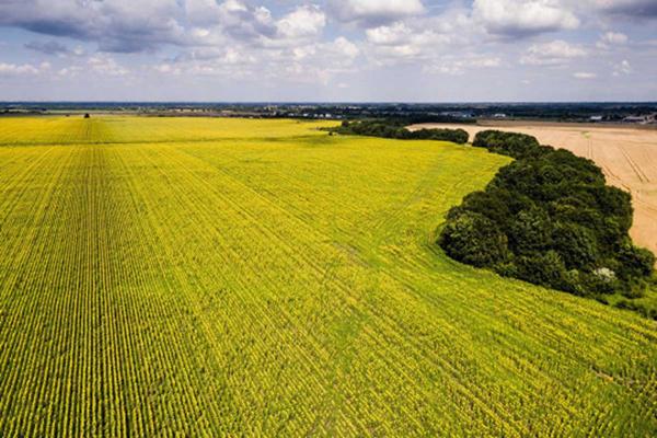 Верховная Рада поддержала отмену моратория на продажу земли
