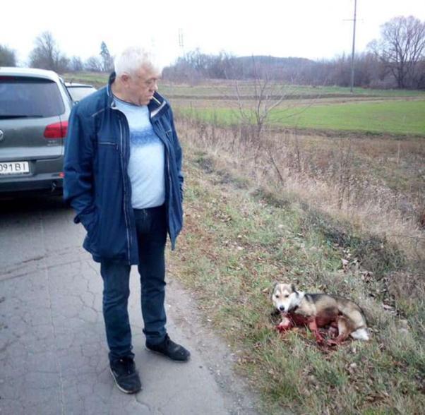 Глава архива Хмельницкой области, пытавший собаку, интересуется немецкой оккупацией Украины