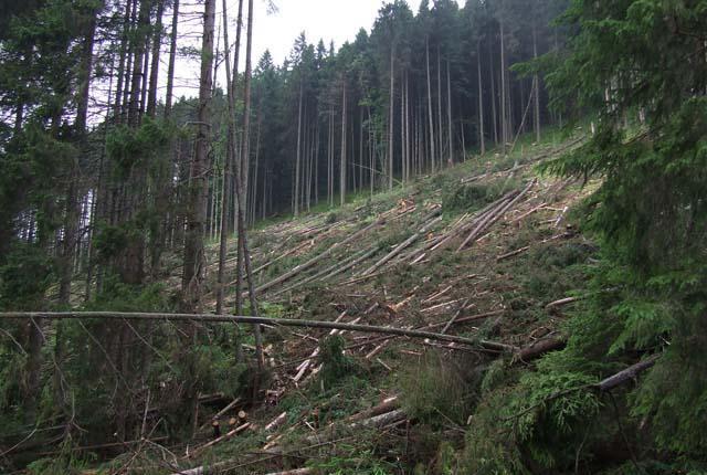 Новый закон под видом сохранения позволяет сплошную вырубку Карпат