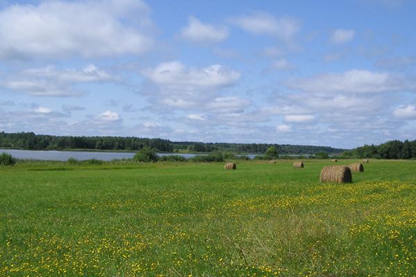 Председатель поселка в Кировоградской области раздавал земли за взятку