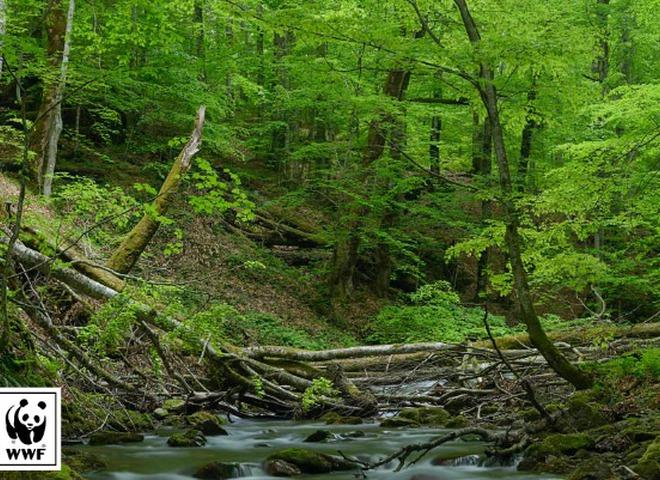 Глава Ужанского нацпарка покрывал незаконную вырубку деревьев
