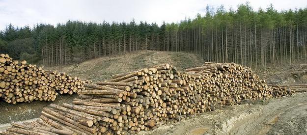 Из-за халатности чиновников лесничества в Харьковской области государство потеряло 10,5 млн гривен