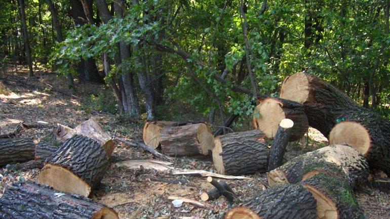 Из-за халатности харьковских лесников вырубили деревьев на 10,5 млн гривен