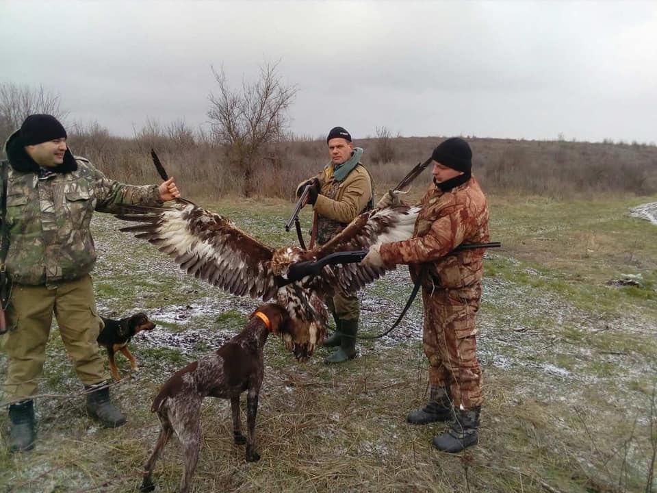 В Одесской области полицейские убили орла из Красной книги
