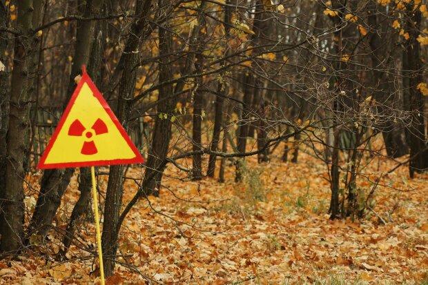 Государству вернули участок земли в лесах Чернобыльской зоны