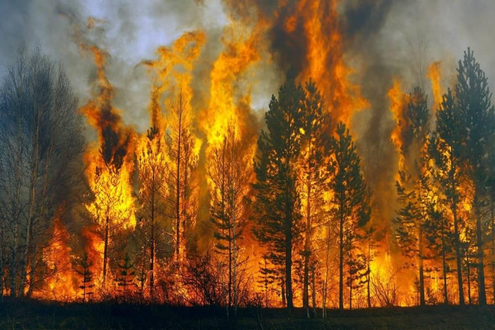 Нардепы предложили усилить ответственность за засорение лесов