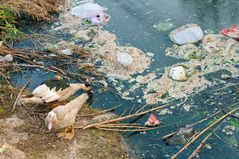 Верховная Рада решила значительно повысить штрафы за загрязнение водоемов и браконьерство