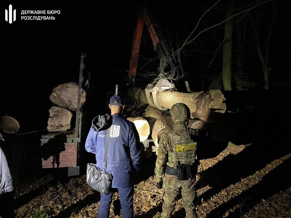 Сотрудник лесхоза во Львовской области организовал преступную группу по незаконной рубке леса