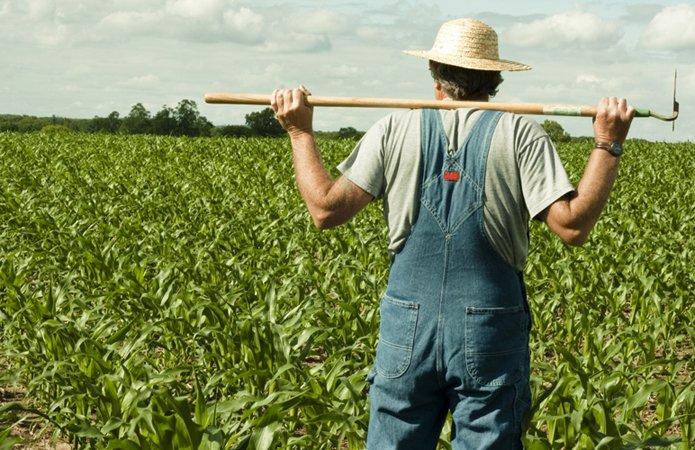 Кабмин планирует создать онлайн-платформу для малых и средних фермеров