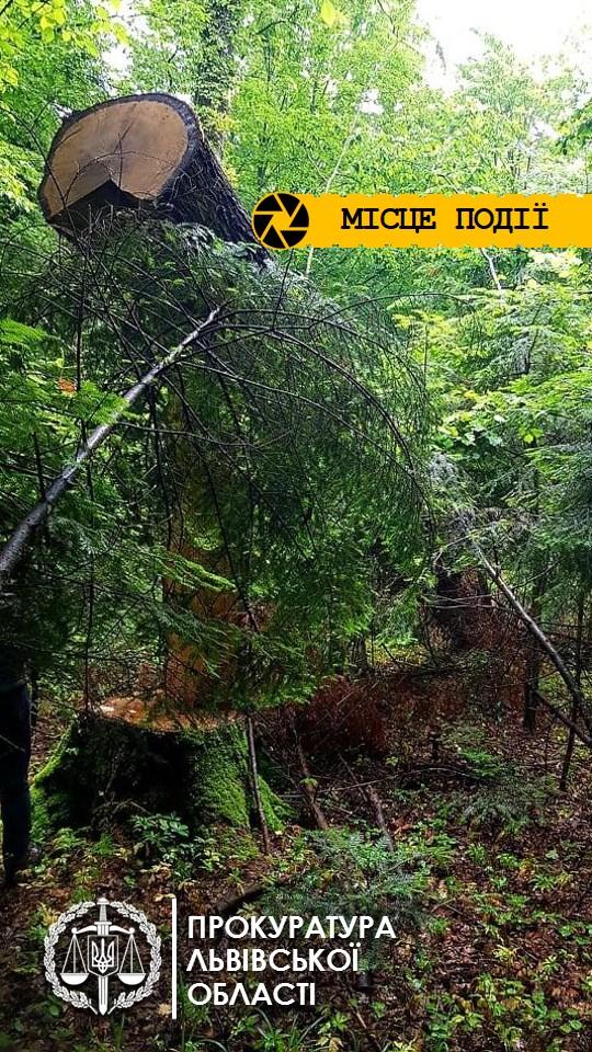 В Дрогобыче коммунальщики под видом охраны парка вырубали деревья