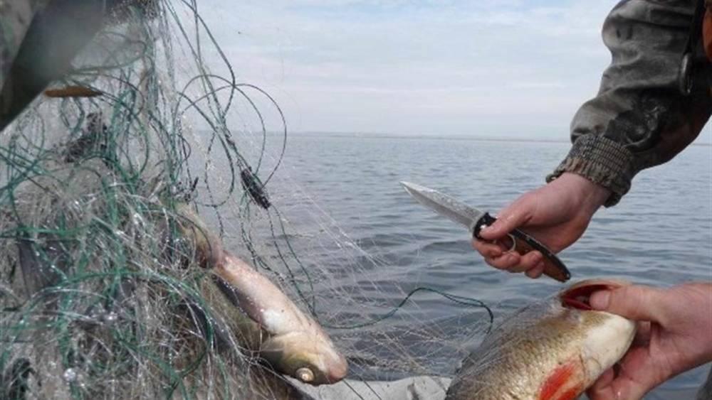 Верховная Рада решила повысить штрафы для браконьеров-рыбаков