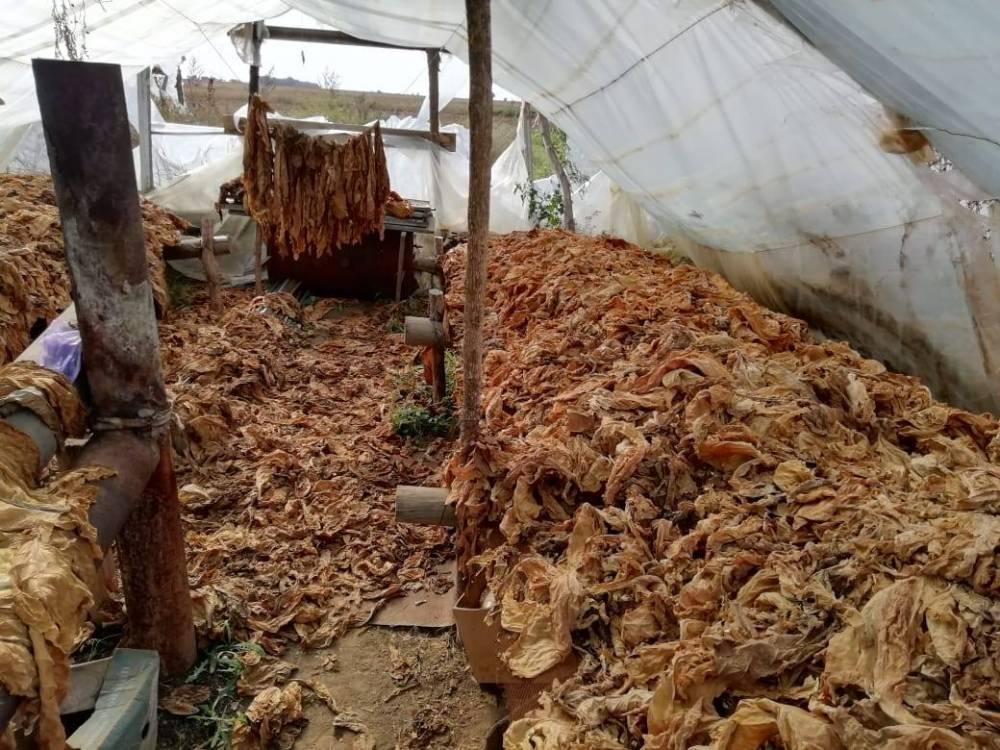 В Херсонской области разоблачили нелегальное производство табачного сырья