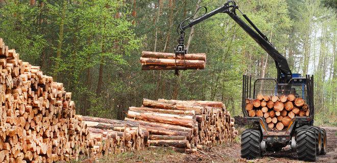 Чиновника агролесхоза в Сумской области подозревают в незаконной вырубке деревьев почти на 1 млн гривен