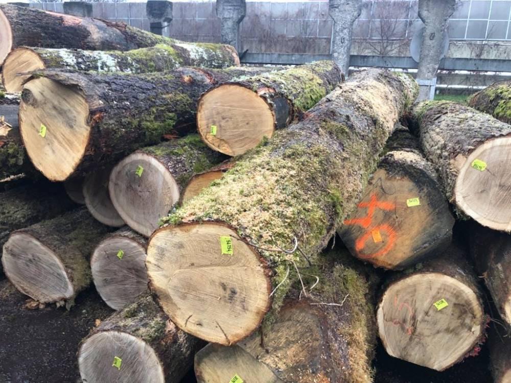 Украина начала импорт древесины из Европы из-за коррумпированности внутреннего рынка
