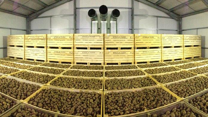 В Украине дефицит картофелехранилищ составляет 80%