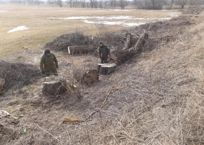 В Полтавской области обнаружили незаконную вырубку на 3,5 млн гривен