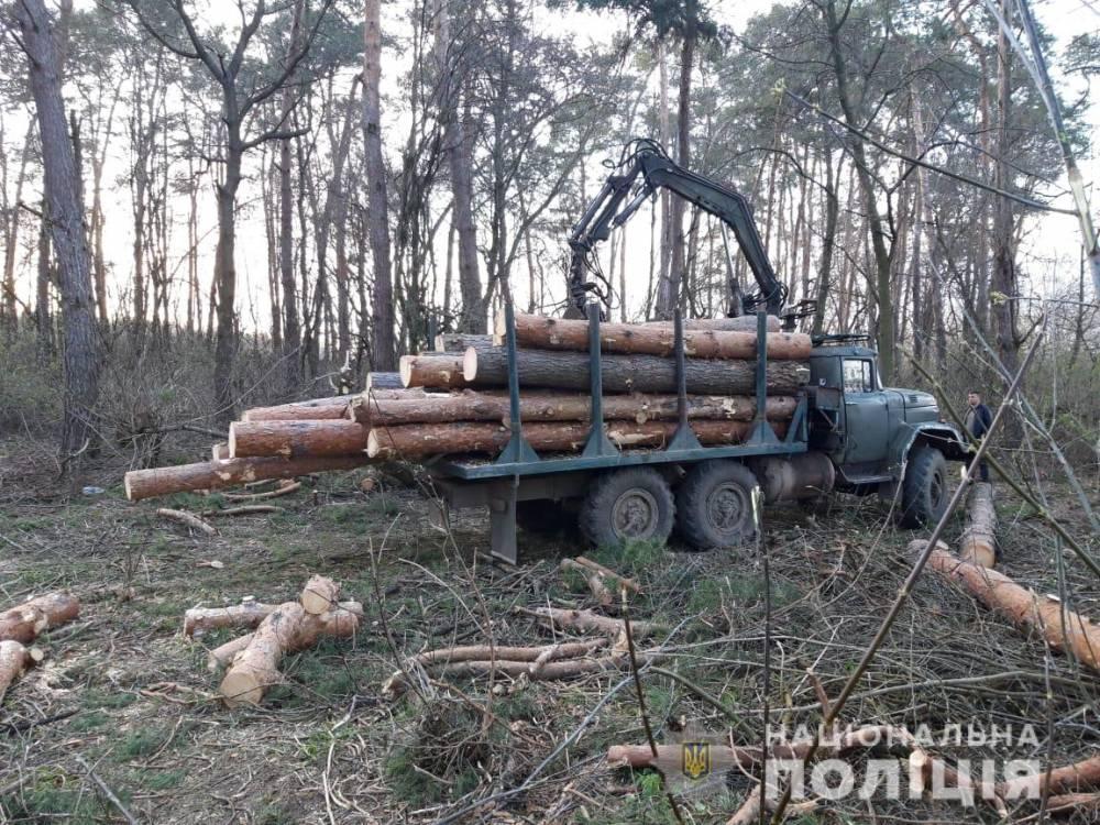 В Винницкой области сотрудники лесхоза попались на незаконной рубке деревьев