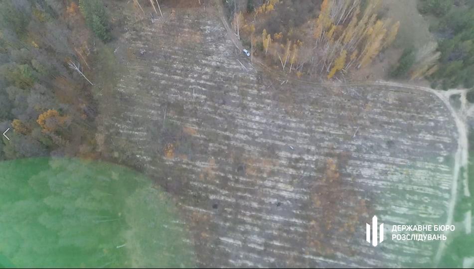 В Киевской области незаконно вырубили 8 га леса