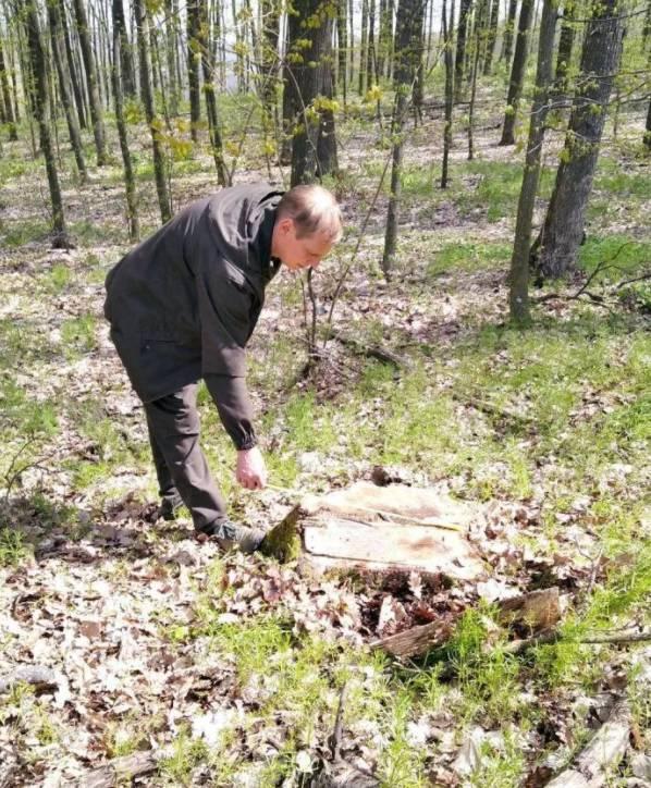 В Тульчинском районе неизвестные вырубили деревья на более чем 3 млн гривен