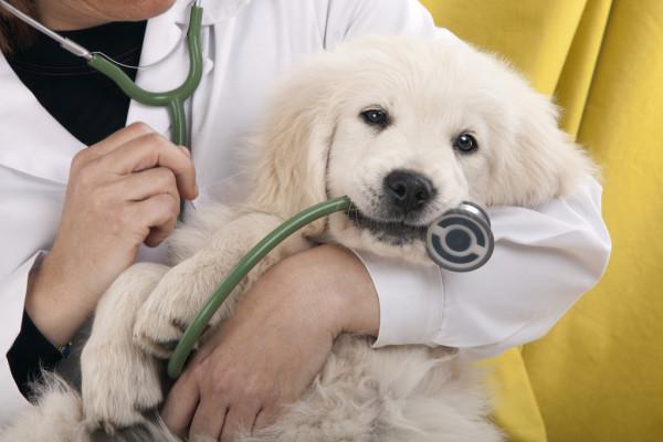 В Борисполе ветеринар требовал взятку за выдачу паспортов на животных